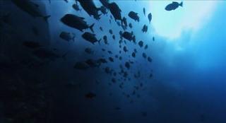 Earth la potenza del pianeta Oceani 1x04