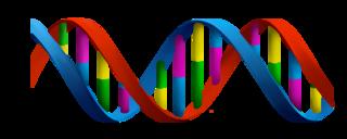 Report Marketing genetico, grano trattato, diamanti 2017x00