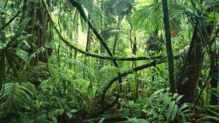 Ulisse: il piacere della scoperta I segreti della giungla 2015x00